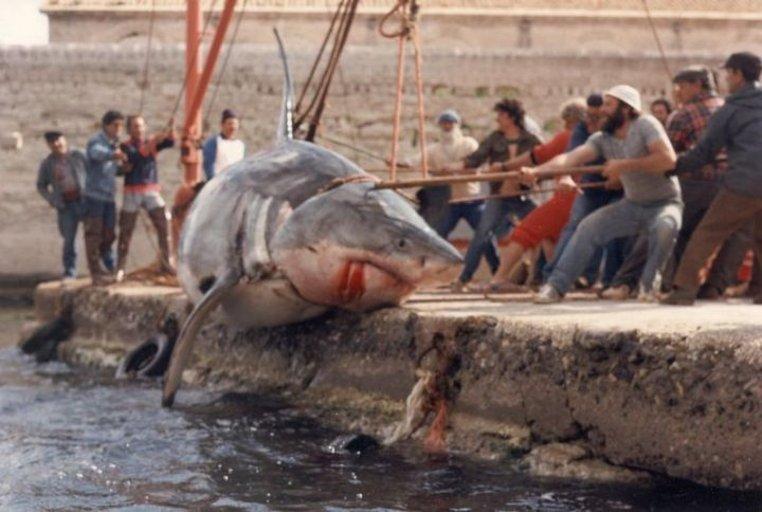 Lo squalo bianco più grande catturato in ITALIA