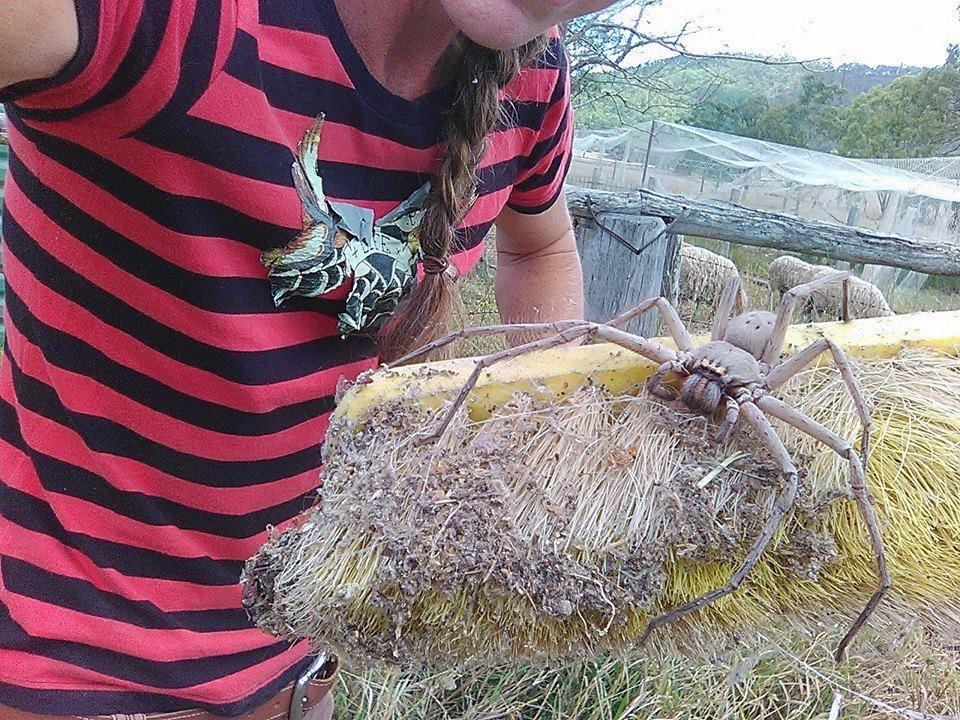 charlotte-e-il-ragno-gigante-che-terrorizza-il-web